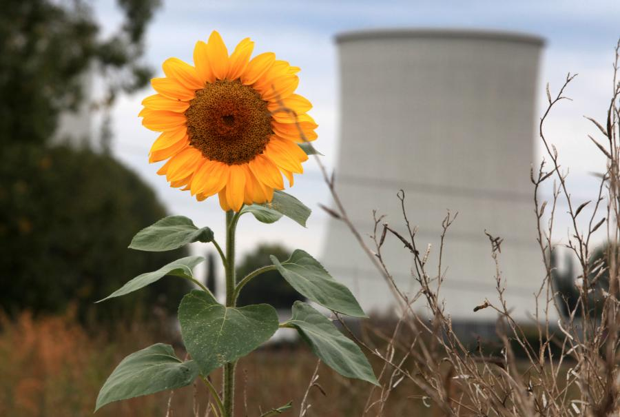 nuclear power plant in Germany & sunflower