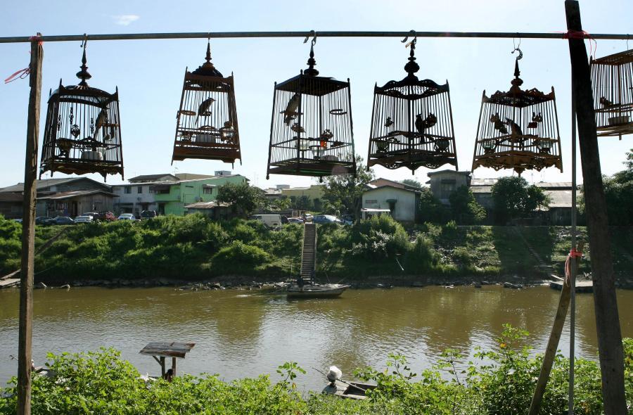 Malezyjskie klatki z ptakami wiszące nad rzeką Golok, przy granicy z Tajlandią