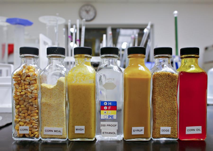 Butelka z 200 proc. etanolem (w środku) otoczona przez butelki zawierające różne rodzaje kukurydzy.