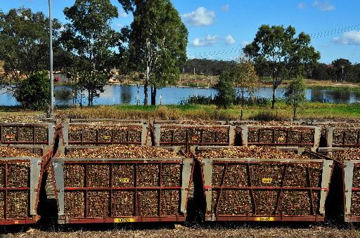 Transport trzciny cukrowej w australijskim Queenslandzie. Fot. Bloomberg