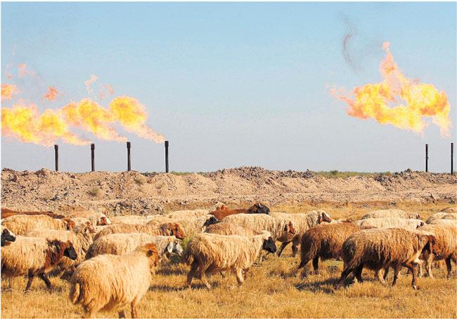 Pole naftowe w okolicach irackiego miasta Amara