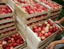 Rolnictwo: wpłynęło ponad 1mln wniosków o dopłaty bezpośrednie