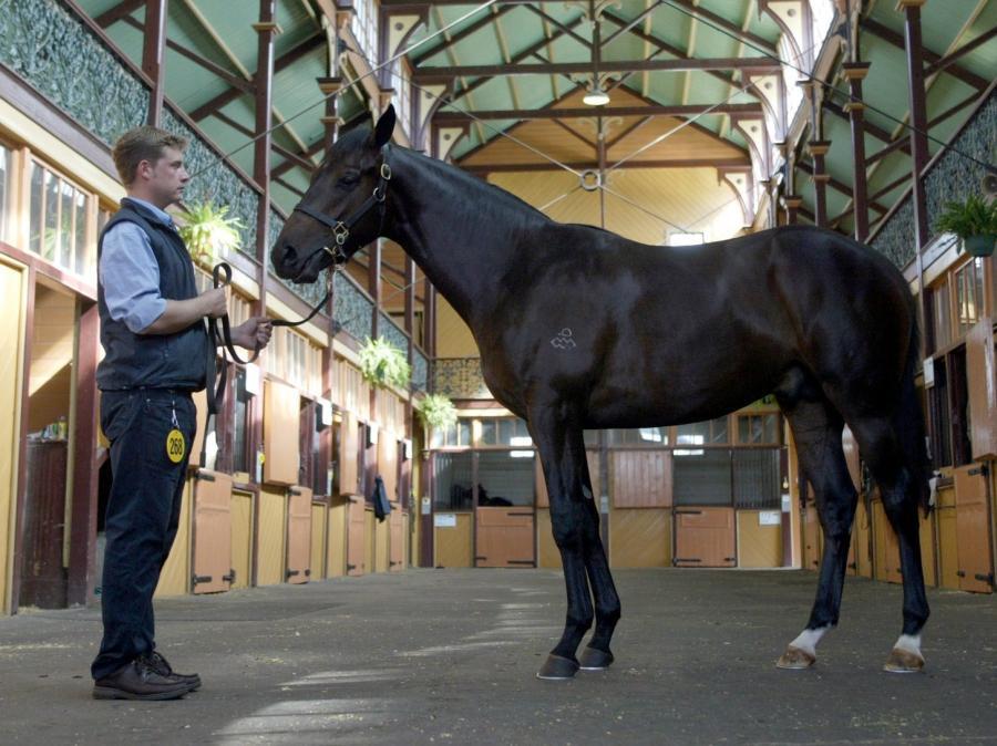 W Dubaju zostanie otworzony największy na świecie tor wyscigów konnych
