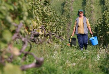 Rumuńskie rolnictwo