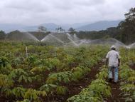 Handlowe porozumienie z Ameryką Płd. może uderzyć w unijne rolnictwo