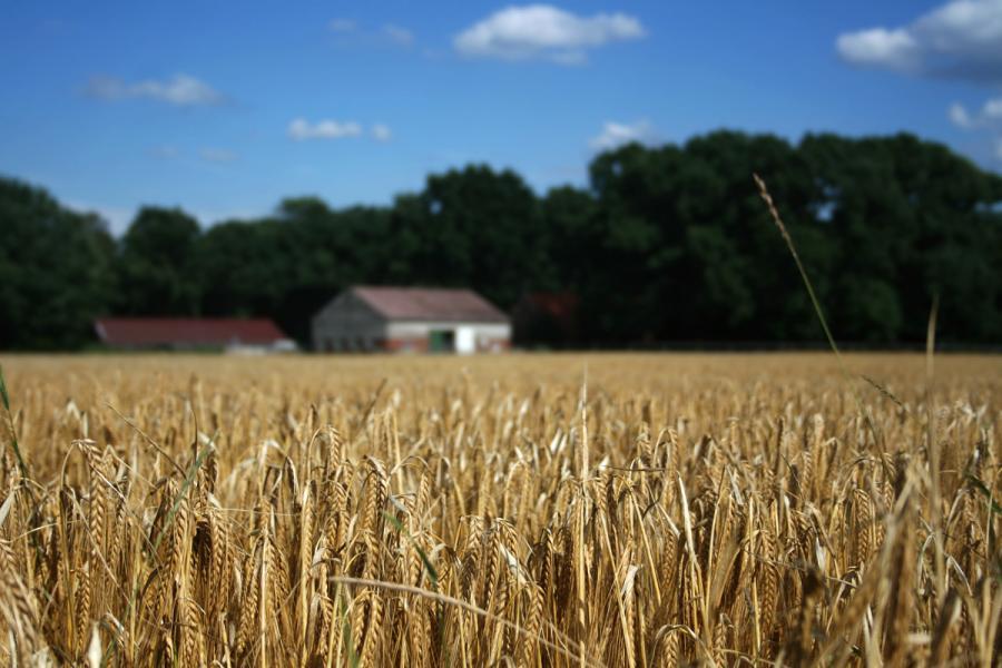 Agencja Restrukturyzacji i Modernizacji Rolnictwa będzie mogła potrącać rolnikom część dopłat, gdy zadeklarowany przez nich obszar, za jaki mogą otrzymać pieniądze, przekroczy ten potwierdzony przez Agencję - zdecydował w piątek Senat.