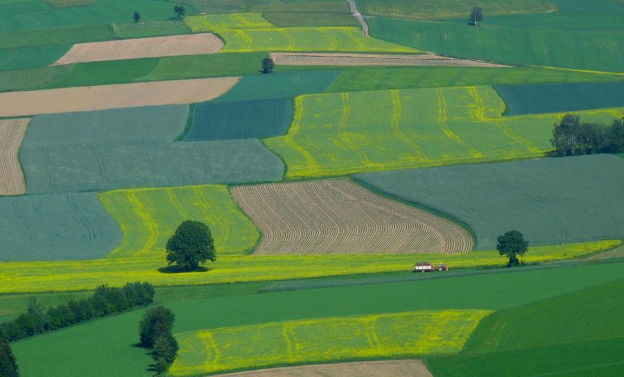 Pola uprawne i łąki
