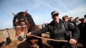 Wstępy - Jarmark Koński w Skaryszewie, 14 bm. Wstępy odbywają się tylko raz do roku, w pierwszy poniedziałek Wielkiego Postu. Jest to największy w Polsce jarmark koni pociągowych, roboczych fot.Tomasz Gzell PAP