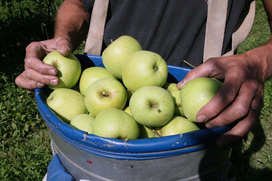 Chińskie jabłka