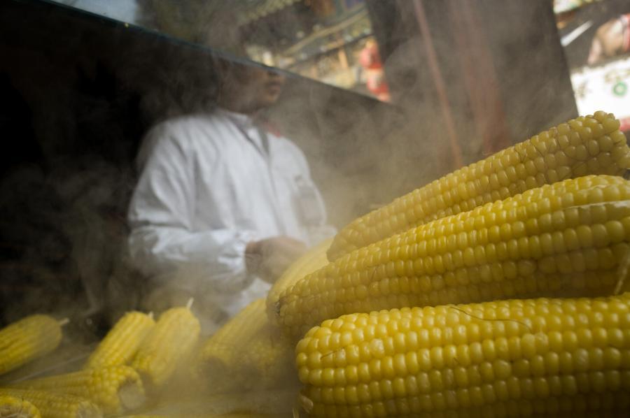 Dzięki wytknięciu Komisji Europejskiej proceduralnego uchybienia, polski rząd doprowadził do unieważnienia decyzji KE, która zabraniała Polsce wprowadzenia zakazu upraw roślin genetycznie modyfikowanych (GMO). Wyrok w tej sprawie ogłosił w czwartek Sąd UE.