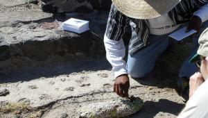 Tradycyjny sposób zbierania czerwców kaktusowych, fot. hspaludi/Flickr