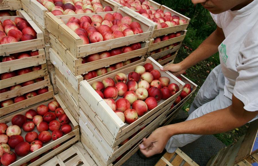 Największa giełda rolno-spożywcza w Polsce na sprzedaż