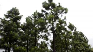 Drzewa, las, fot. Qilai Shen/Bloomberg