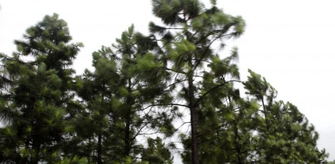 Wchodzą w życie przepisy ws. pierwokupu prywatnych lasów przez państwo fot. Qilai Shen/Bloomberg