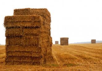 Energia z biomasy jest lepsza niż z wiatru