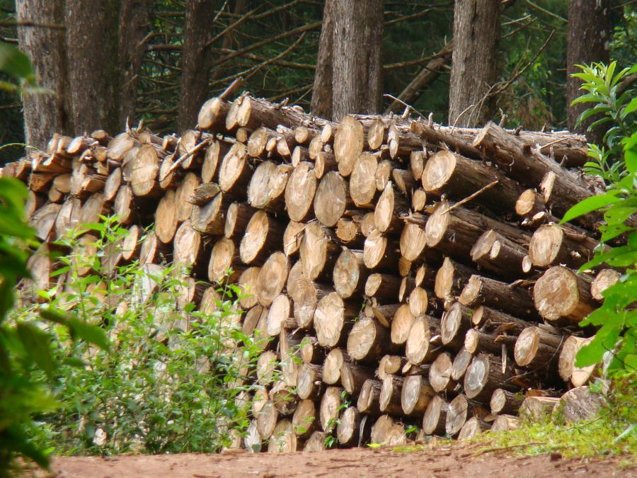 Polskie meble pójdą z dymem - alarmuje Puls Biznesu. Nowelizacja rozporządzenia regulującego wykorzystanie odnawialnych źródeł energii w elektroenergetyce zmienia definicję biomasy. Wynika z niego, że oprócz zrębków i trocin, do pieców może też trafiać drewno okrągłe.