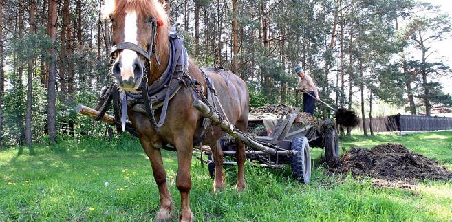 Polski rolnik i wóz konny
