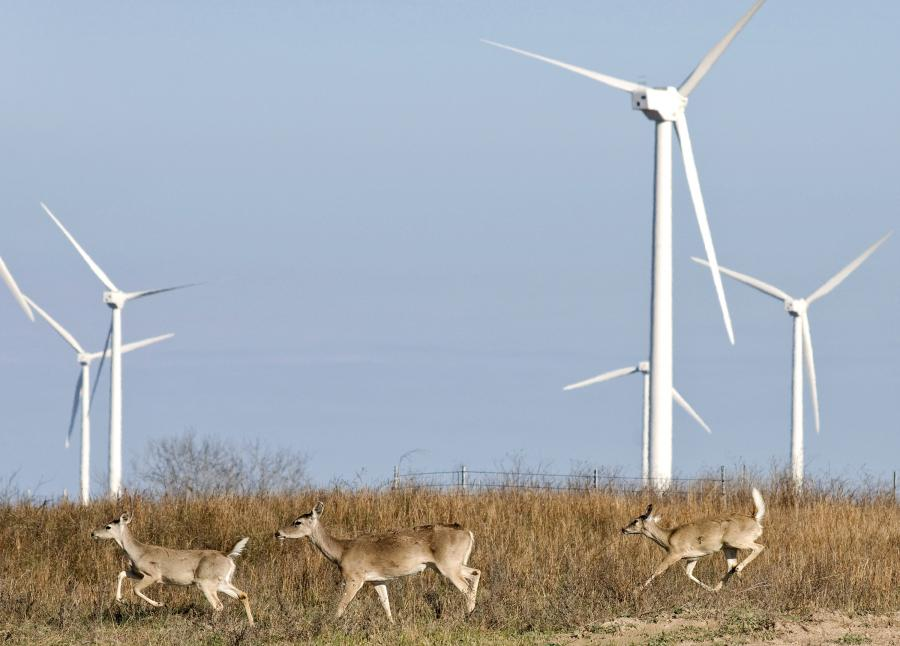 W 2020 r. w Polsce 15,5 proc. w zużyciu energii końcowej brutto ma pochodzić z odnawialnych źródeł energii (OZE). Fot. Bloomberg