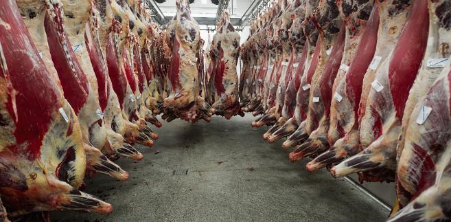 Wołowina w rzeźni