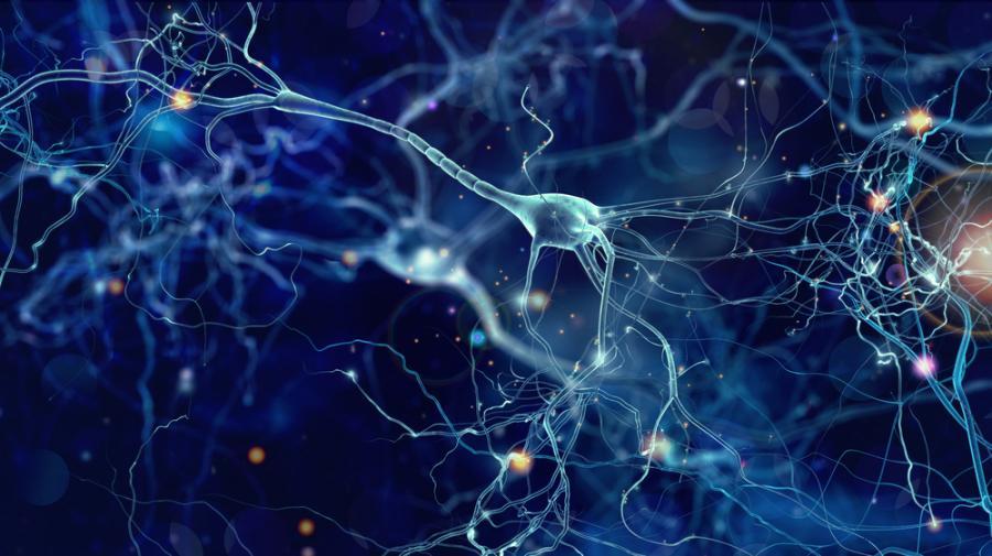 komórka nerwowa; neuron; aksony;
